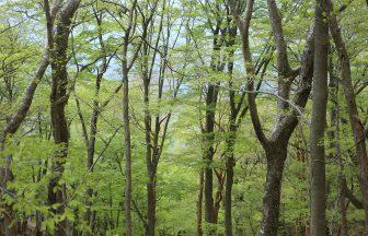 祖母傾山系の森にて