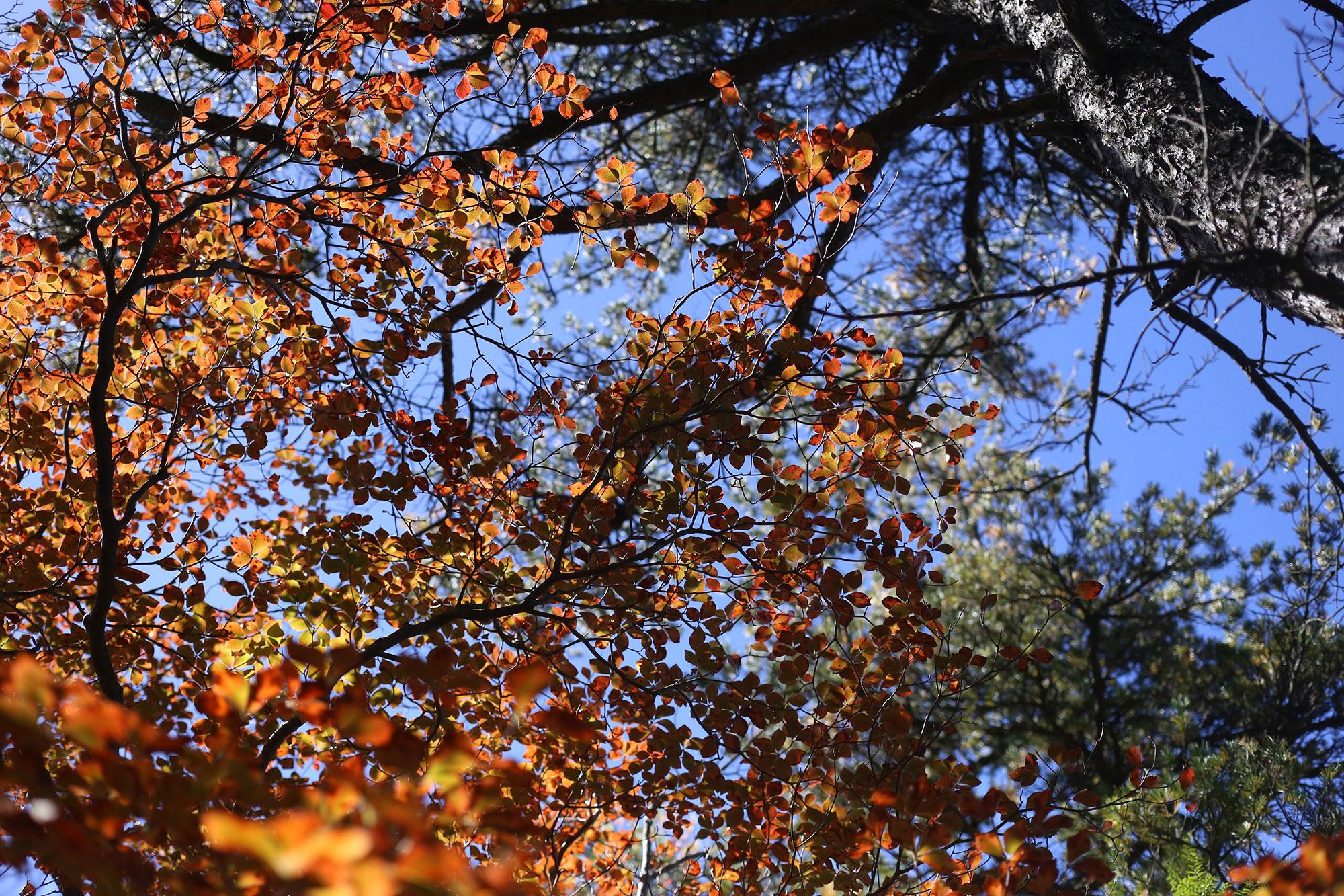 大崩山で眺めた紅葉