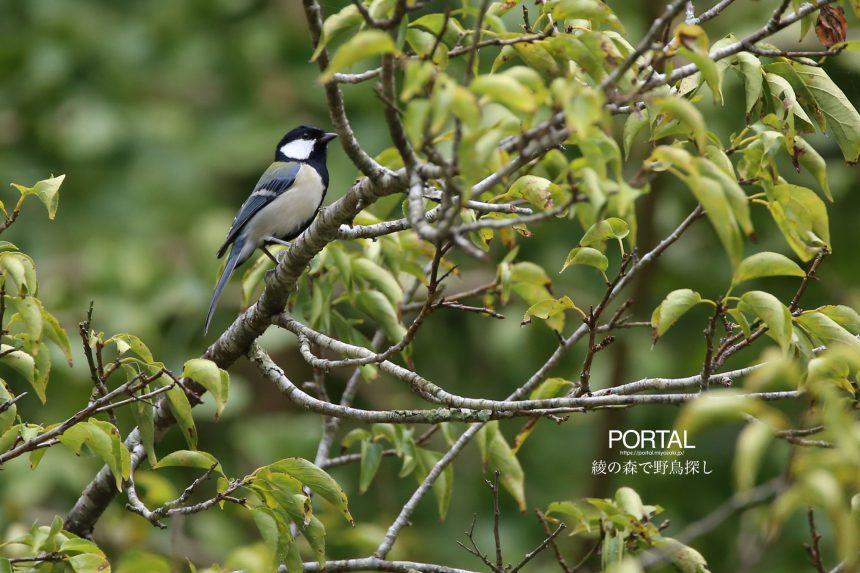 綾の森で野鳥探し