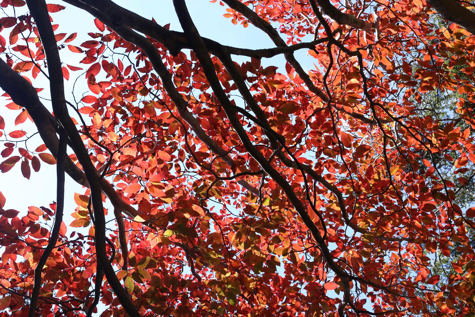 石堂山で見かけた紅葉