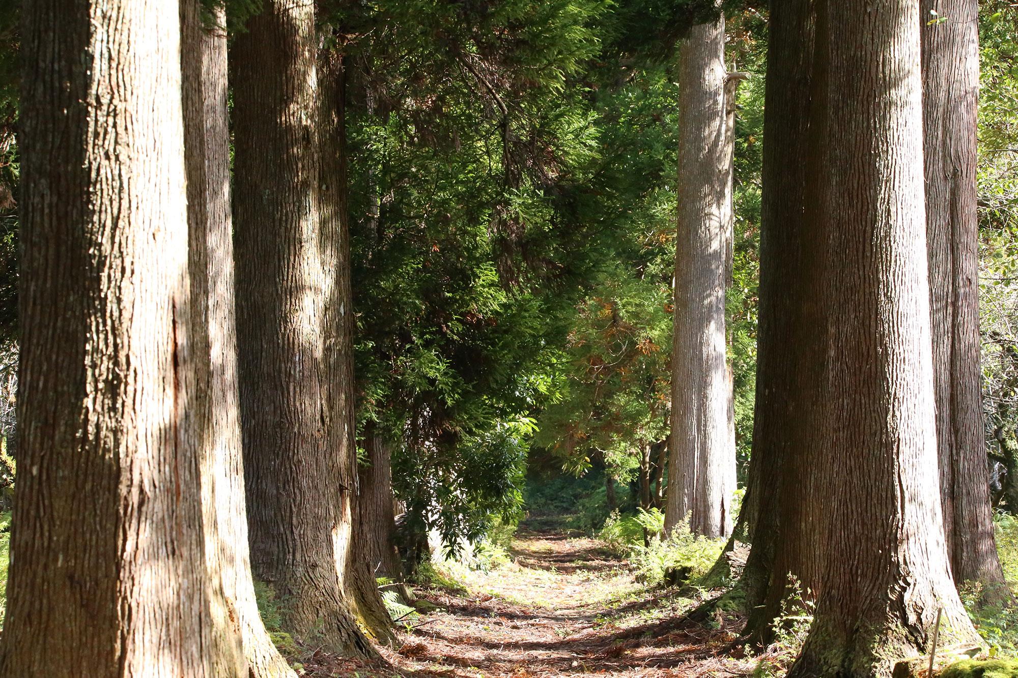 絵画のような森を抜けて