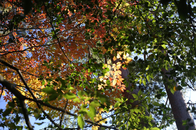 祖母山の紅葉