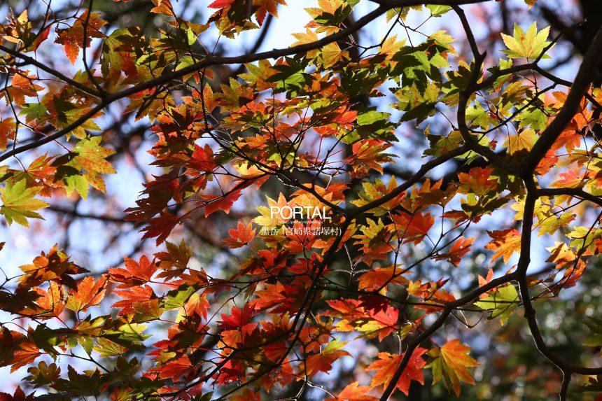 黒岳(諸塚村)の紅葉