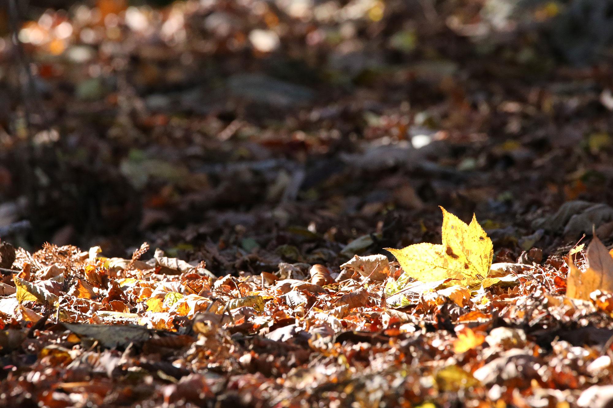 落ち葉の絨毯も快適な季節です