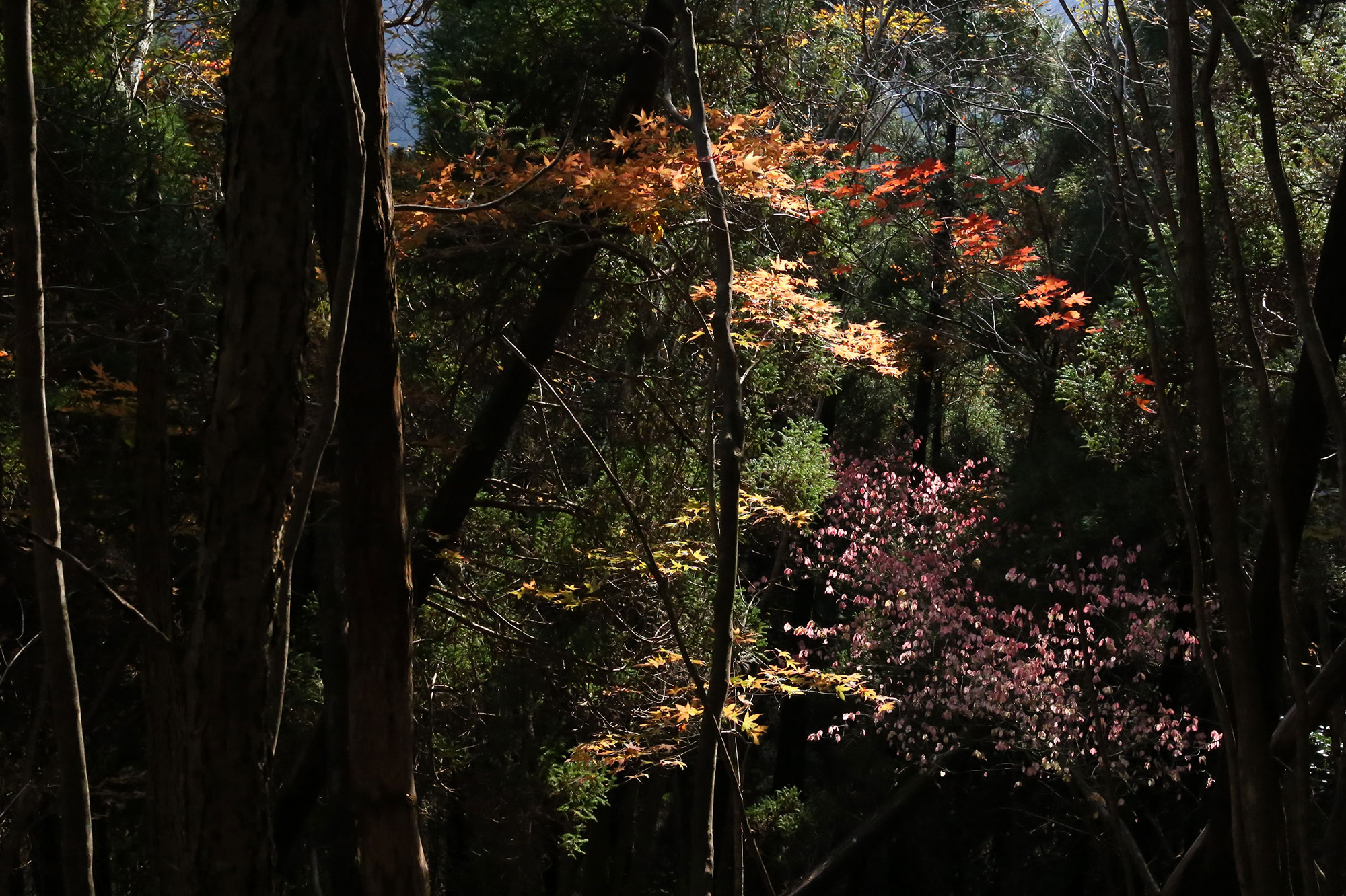 幻想的な紅葉も