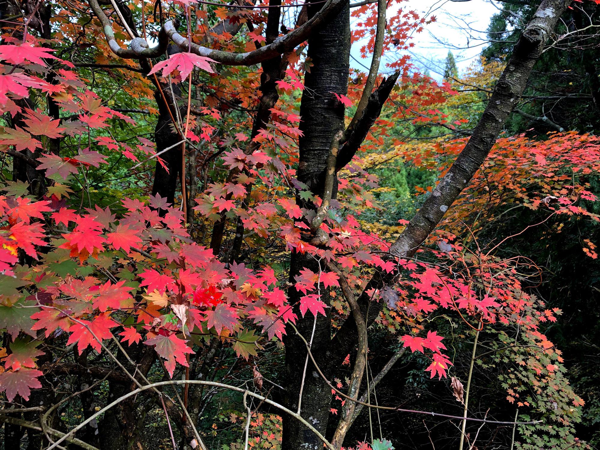 下山中に眺めた紅葉
