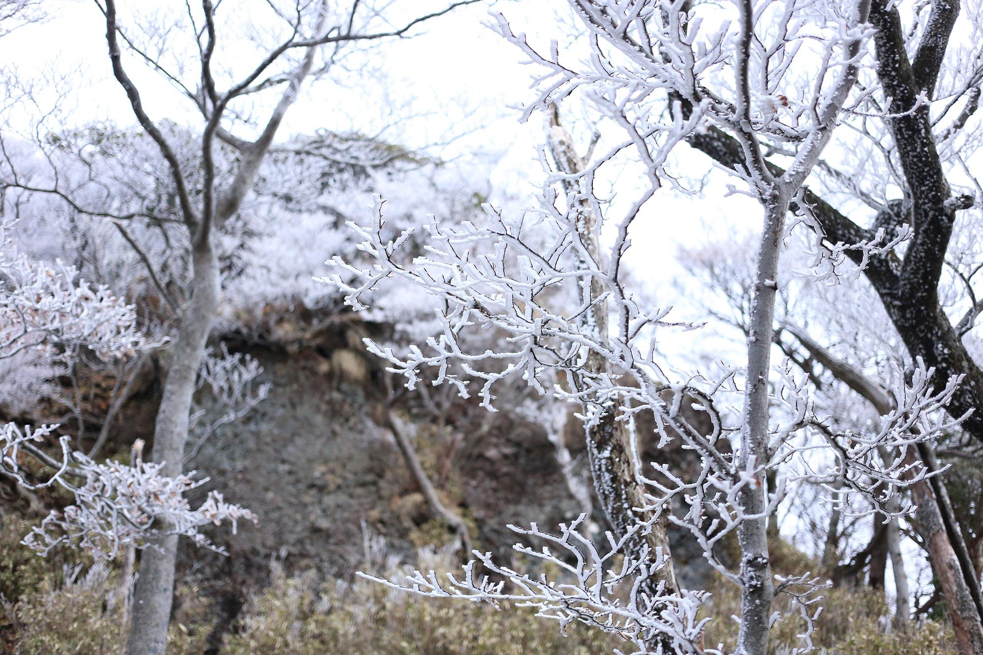 祖母山の霧氷