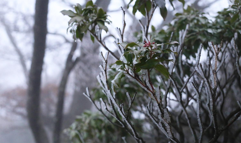 霧氷をもう見れるとは思っていませんでした、山の上はすっかり初冬です。