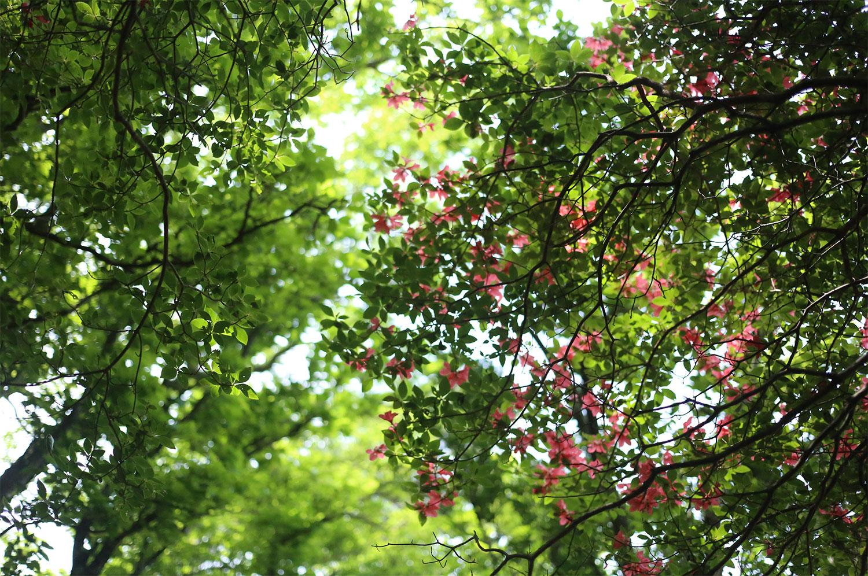 これからの新緑や花の季節も楽しみです