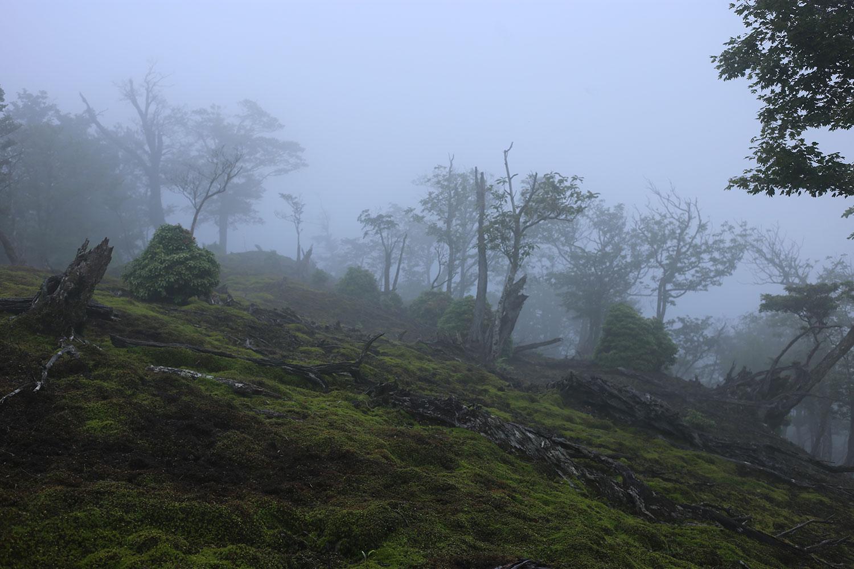 苔むした原生林と、美しい霧の風景