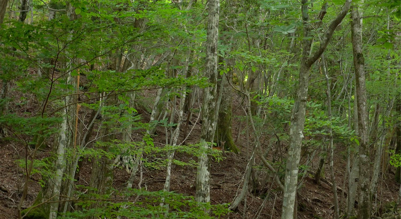 緑の森と鹿