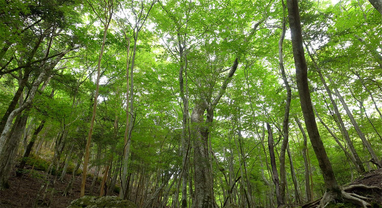 美しい夏の緑の森