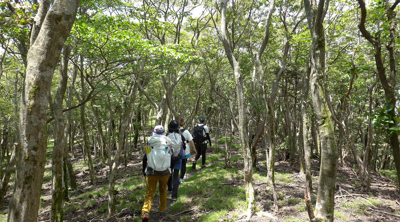 低木に囲まれた快適な木陰を歩きます