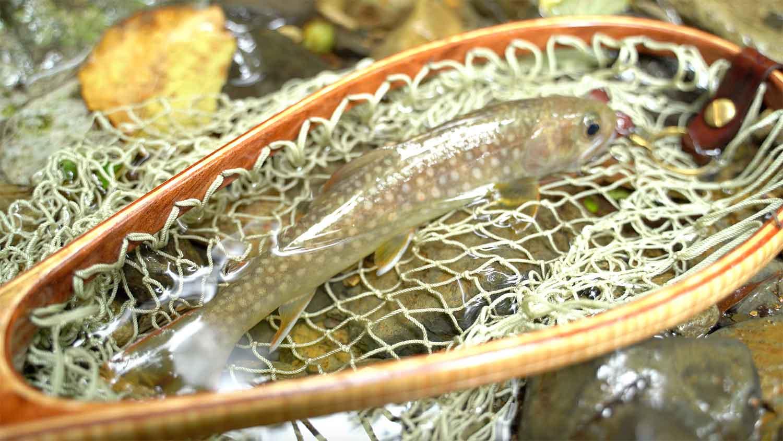 岩魚(イワナ)