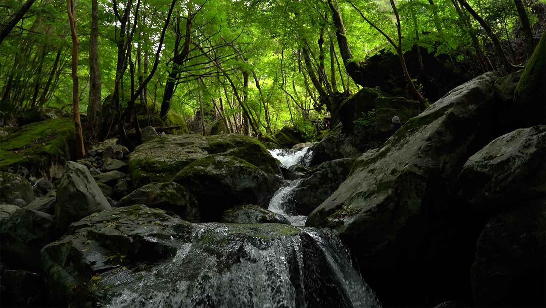 黒と緑の美しい谷